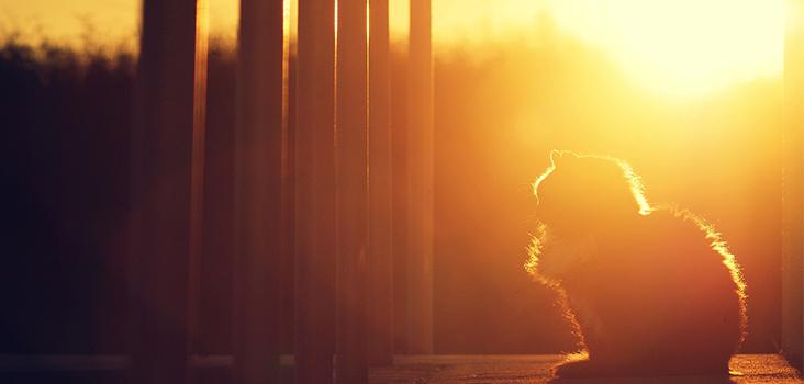 Köpek ve Kedilerde Güneş Çarpması