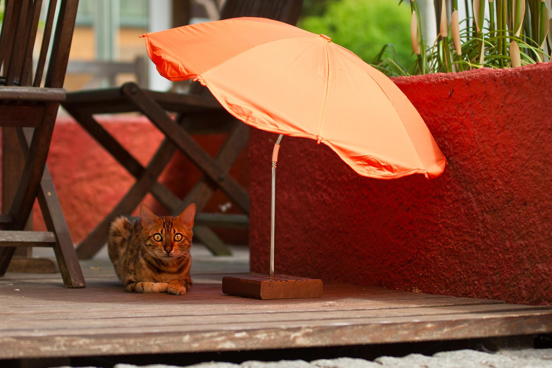 Kedi ve köpeklerde Güneş Çarpması