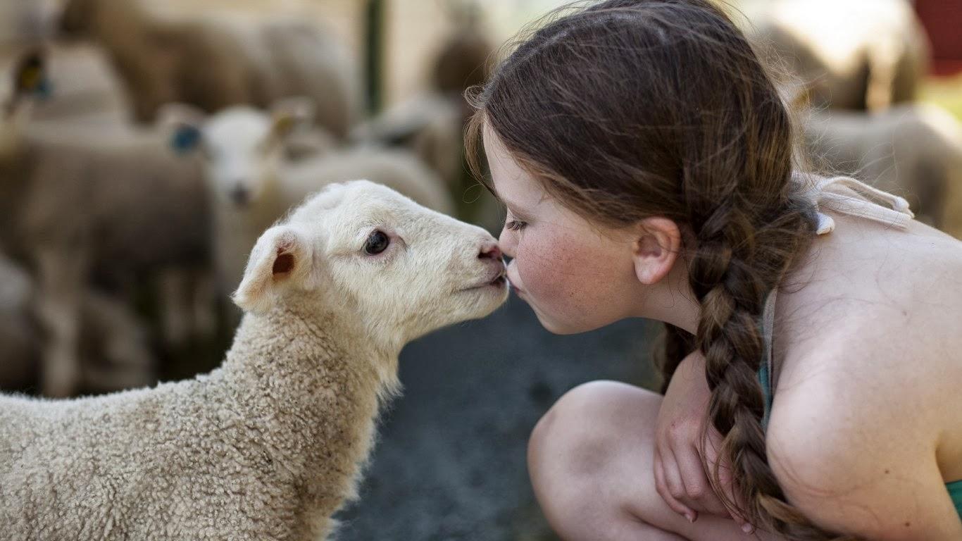 kurban hayvan hakları