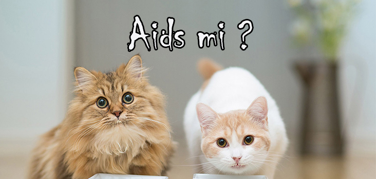 Kedi Aids'i (FIV) Feline immunodeficiency Virus