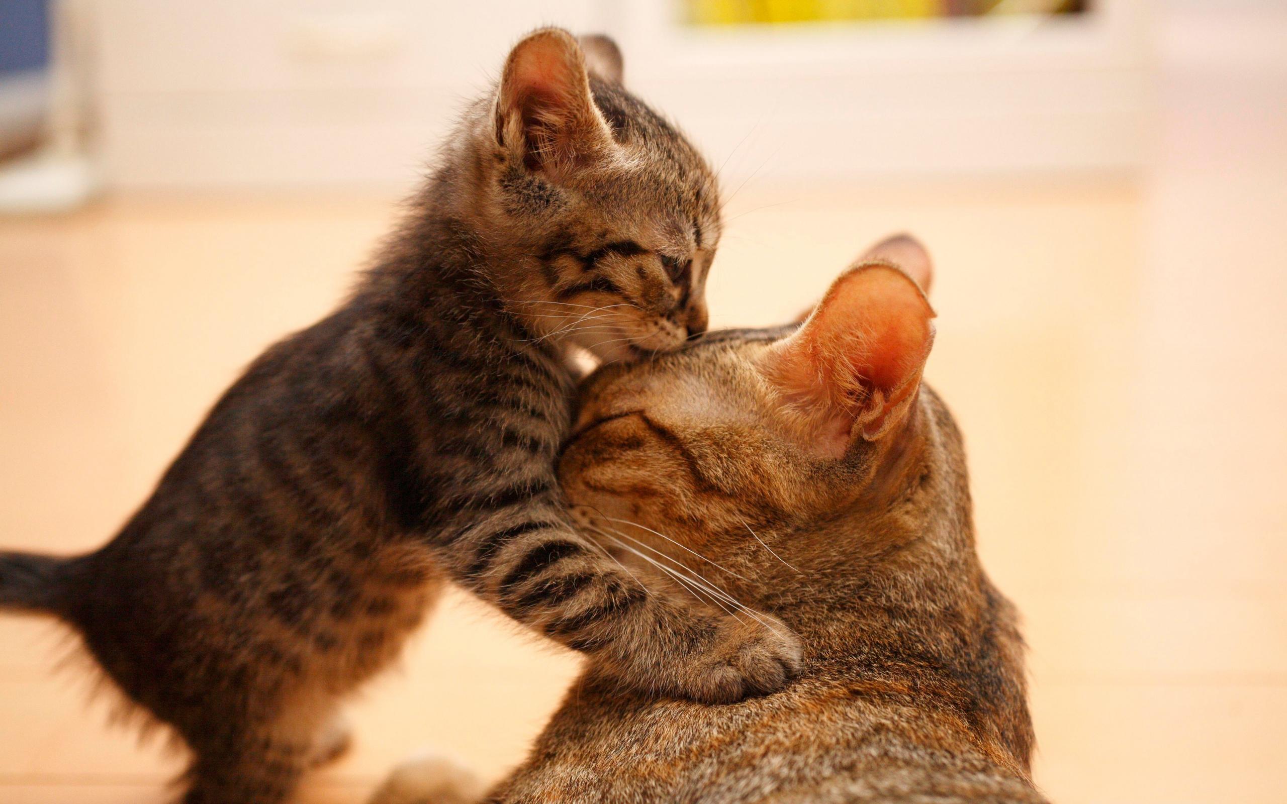 yavru kedi fiv virus