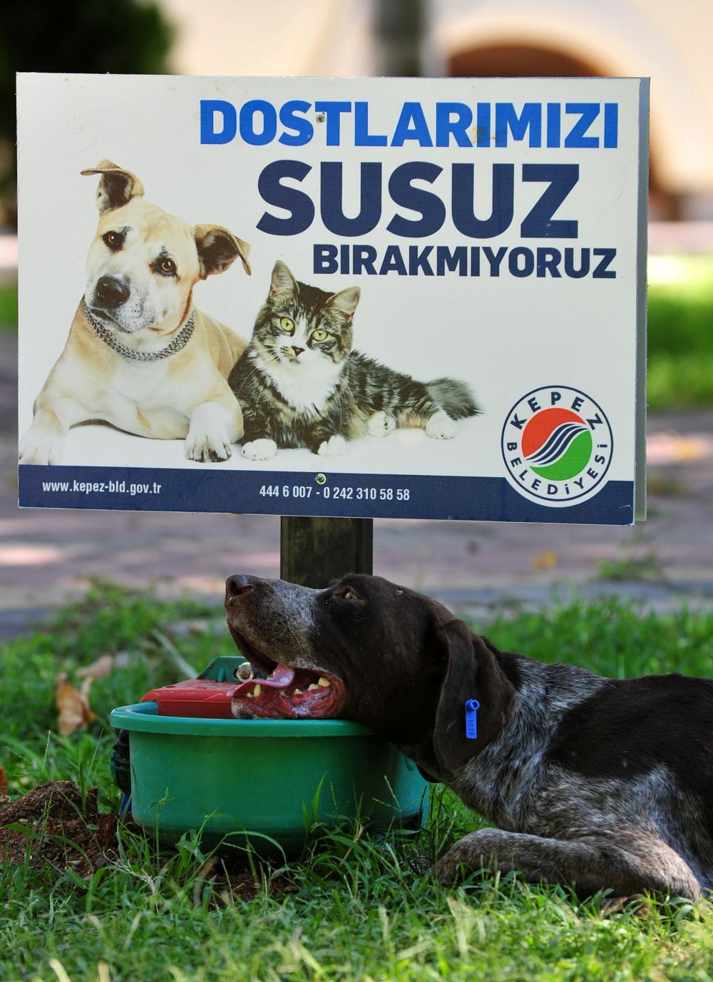 belediye hayvan hakları