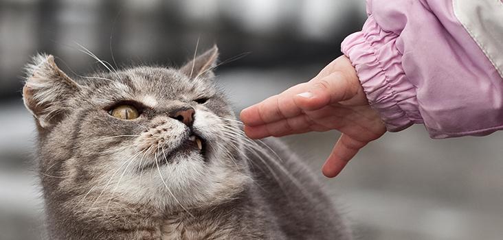 Kediyi Enseden Tutma lımı?