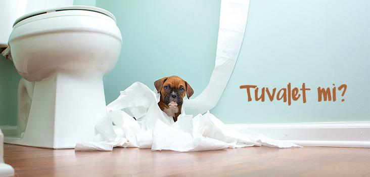 Yavru Köpek Tuvalet Eğitimi